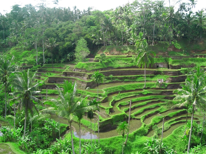 Rice Terrace in Ubud, Bali. Picture taken from http://bit.ly/1euX5ul