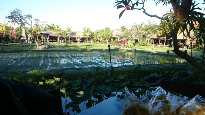 The rice paddy in the middle of the restaurant
